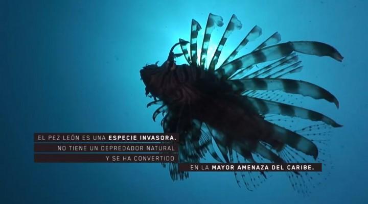 Pez León – Ministerio de Medio Ambiente y Desarrollo sostenible