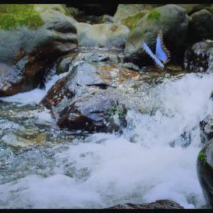 Lanzamiento película Colombia, Magia Salvaje – Sancho BBDO